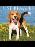 Just Beagles 2022 Wall Calendar (Dog Breed)