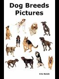 Dog Breeds Pictures: Over 100 Breeds Including Chihuahua, Pug, Bulldog, German Shepherd, Maltese, Beagle, Rottweiler, Dachshund, Golden Ret