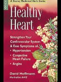 Healthy Heart: Strengthen Your Cardiovascular System