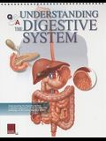 Q&A Understanding the Digestive System