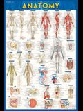 Anatomy Poster (24 X 36) - Laminated: A Quickstudy Reference