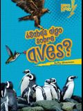 ¿sabes Algo Sobre Aves? (Do You Know about Birds?)