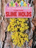 Creepy Crawly Slime Molds