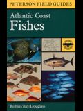 A Field Guide to Atlantic Coast Fishes: North America (Peterson Field Guides)