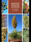 Agaves, Yuccas, and Their Kin: Seven Genera of the Southwest