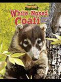 White-Nosed Coati: Raccoon's Cousin