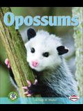Opossums (Early Bird Nature)