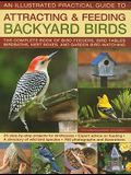 Backyard Birds III: Practical Guide to Attracting and Feeding