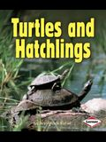 Turtles and Hatchlings