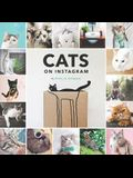 Cats on Instagram