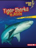 Tiger Sharks in Action