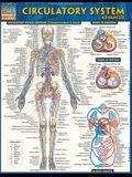 Circulatory System: Advanced