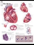 The Heart Chart: Laminated Wall Chart
