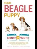 Your Beagle Puppy Month by Month: Everything You Need to Know at Each State to Ensure Your Cute and Playful Puppy