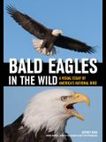 Bald Eagles in the Wild: A Visual Essay of America's National Bird