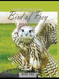 Understanding the Bird of Prey