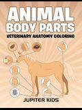 Animal Body Parts: Veterinary Anatomy Coloring