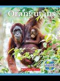 Orangutans (Nature's Children)