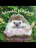 Adorable Hedgehogs 2018: 16-Month Calendar September 2017 Through December 2018