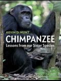 Chimpanzee: Lessons from Our Sister Species