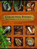 Collecting Fossils: Hold Prehistory in the Palm of Your Hand