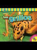 Los Grillos (Crickets)