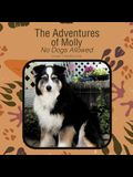 The Adventures of Molly: No Dogs Allowed