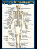 Anatomy of the Joints & Ligaments (Pocket-Sized Edition - 4x6 Inches)