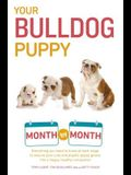 Your Bulldog Puppy Month by Month: Everything You Need to Know at Each Stage to Ensure Your Cute and Playful Puppy