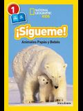 National Geographic Readers: Sigueme! (Follow Me!): Animales Papas Y Bebes