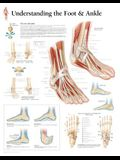 Understanding the Foot & Ankle Chart: Laminated Wall Chart