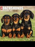 Just Dachshunds 2022 Wall Calendar (Dog Breed)