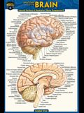 Anatomy of the Brain (Pocket-Sized Edition - 4x6 Inches)
