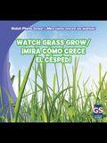 Watch Grass Grow/Mira Como Crece El Cesped!