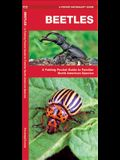Beetles: A Folding Pocket Guide to Familiar North American Species