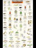 Good/Bad Garden Bugs