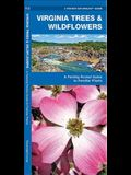Virginia Trees & Wildflowers: An Introduction to Familiar Species