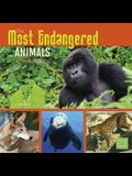 The Most Endangered Animals in the World