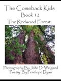 The Comeback Kids, Book 12, the Redwood Forest