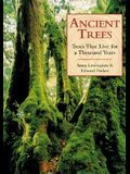 Ancient Trees: Trees That Live For 1,000 Years