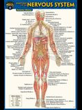 Anatomy of the Nervous System (Pocket-Sized Edition -4x6 Inches)