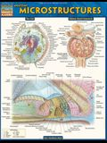 Anatomy: Microstructures
