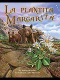 La Plantita Margarita (Daisylocks)