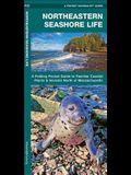 Northeastern Seashore Life: A Folding Pocket Guide to Familiar Coastal Species North of Massachusetts