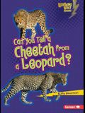 Can You Tell a Cheetah from a Leopard? (Lightning Bolt Books: Animal Look-Alikes (Paperback))