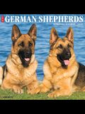 Just German Shepherds 2020 Wall Calendar (Dog Breed Calendar)