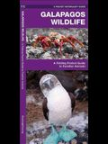 Galapagos Wildlife: An Introduction to Familiar Species