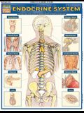Endocrine System: Quickstudy Laminated Anatomy Reference Guide