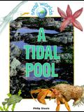 A Tidal Pool (Small Worlds)