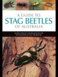 A Guide to Stag Beetles of Australia